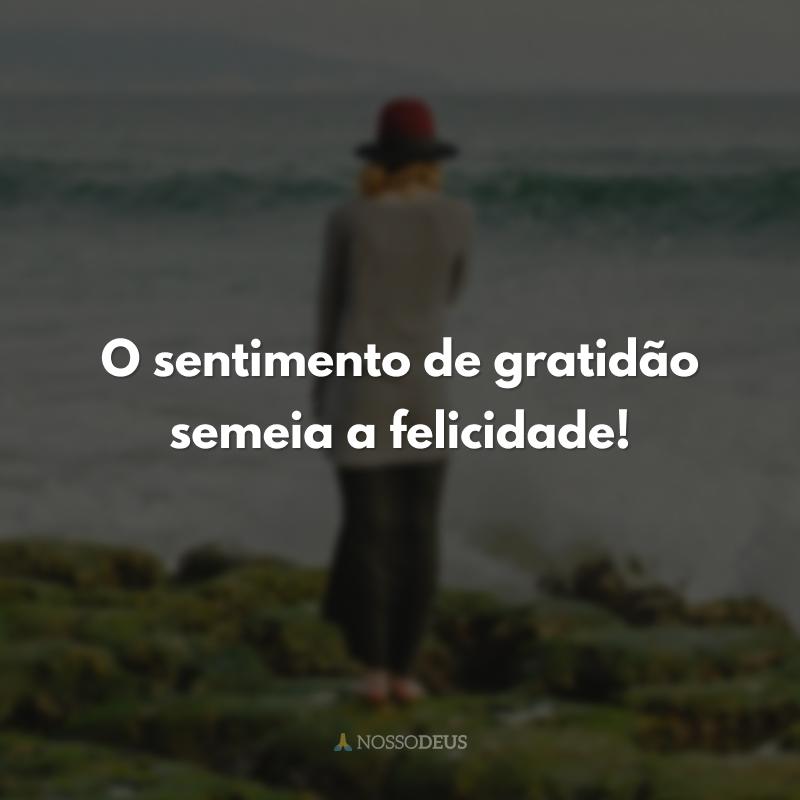 O sentimento de gratidão semeia a felicidade!