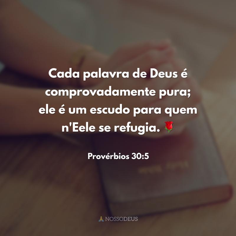 Cada palavra de Deus é comprovadamente pura; ele é um escudo para quem n'Eele se refugia. 🌹