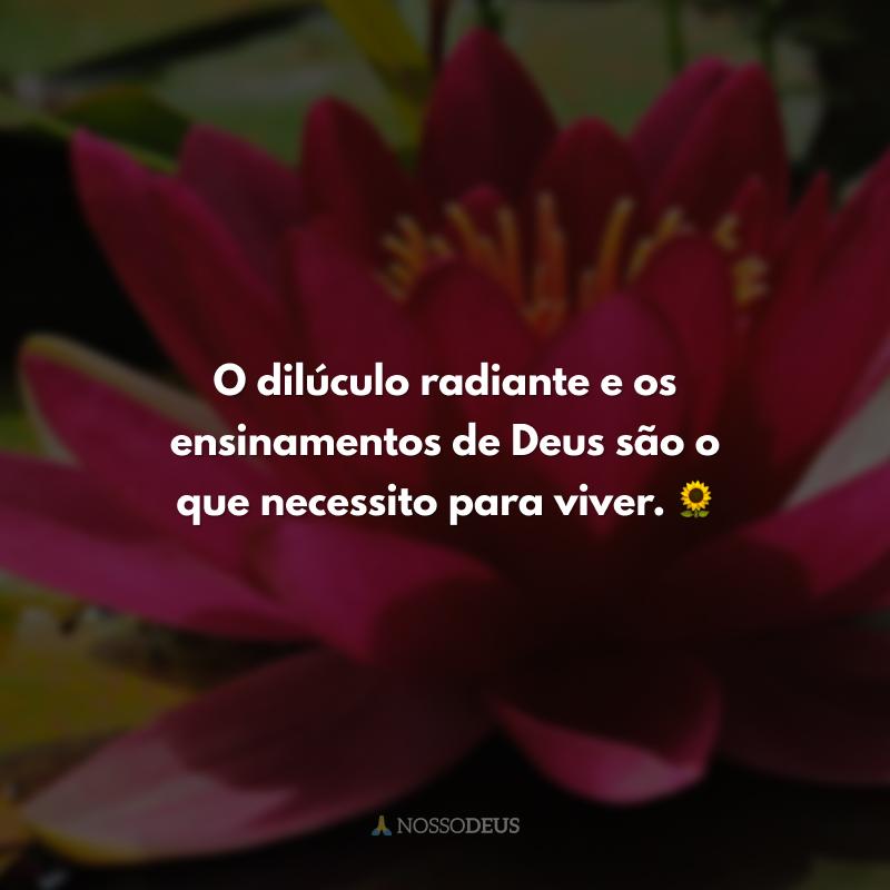 O dilúculo radiante e os ensinamentos de Deus são o que necessito para viver. 🌻
