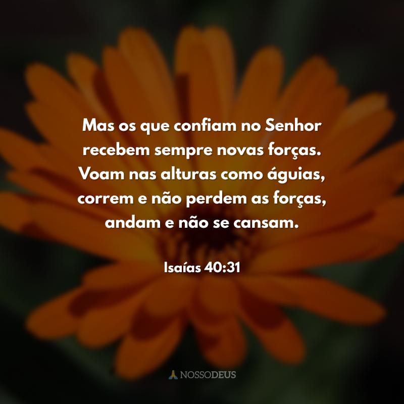 Mas os que confiam no Senhor recebem sempre novas forças. Voam nas alturas como águias, correm e não perdem as forças, andam e não se cansam.